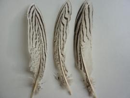 AM.103- 3 stuks smalle zilverfazant veren van 18-24cm lang