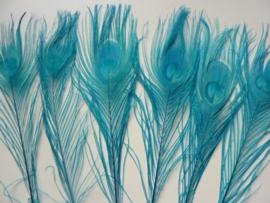AM.83- 10 stuks pauwenveren turquoise van 25-30cm