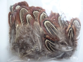 AM.304 - ca. 100 stuks fazantveertjes van 5-7cm lang -