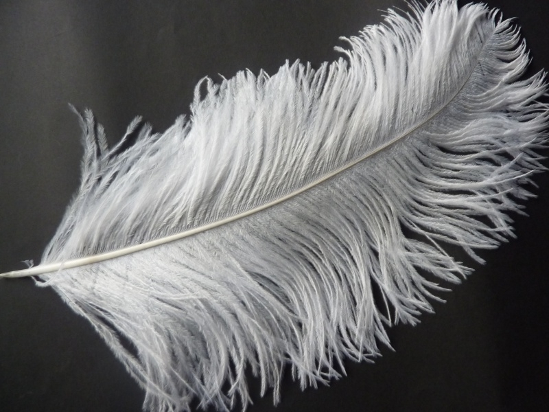 AM.140- Moulin Rouge XL struisvogelveer van 50 - 55 cm wit