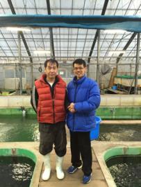 Japanse kweker Shinoda