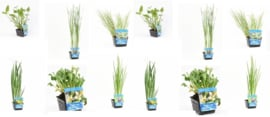 12x Vijverplant  Mix pakket