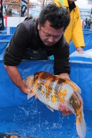 Japanse Kweker Maruhiro
