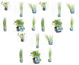 18x Vijverplant  Mix pakket