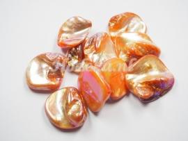 SCH04   1 x Schelp Oranje met olie glans