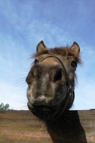 Rolgordijn Paard