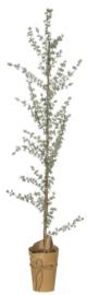 Ib Laursen kerstboom h130
