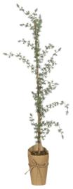 Ib Laursen kerstboom h95
