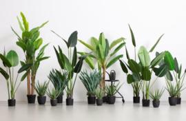WOOOD kunstplant strelitzia