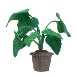 KidsDepot plant alocasia