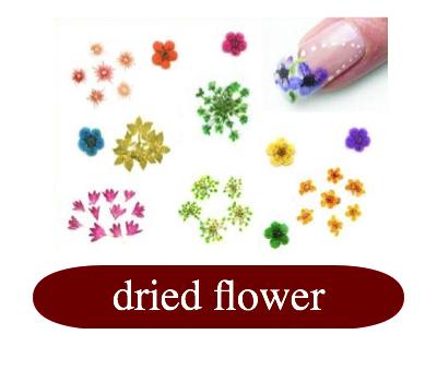dried flower : bloemen.jpg