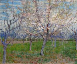 Van Gogh, Bloeiende fruittuin (de roze boomgaard)