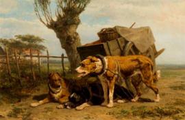 Ronner-Knip, Trekhonden
