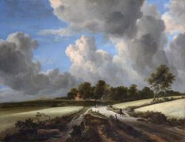 Van Ruisdael, Tarwevelden
