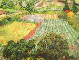 Van Gogh, Klaproosveld