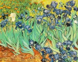 Van Gogh, Irissen