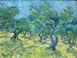 Van Gogh, Olijfgaard