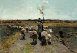 Mauve, Het pasgeboren lam