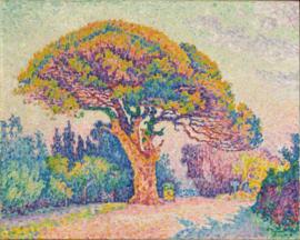 Signac, De dennenboom van Saint-Tropez