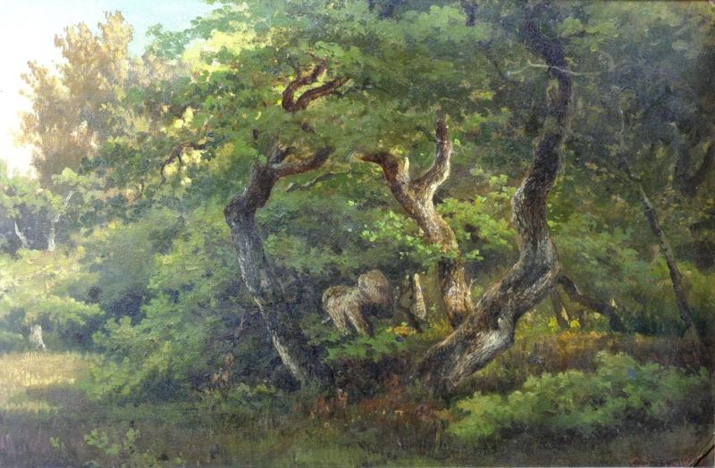 Springer, Groep eiken aan de rand van een bos