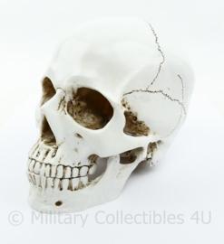Replica schedel - 14 x 14 x 10 cm - origineel