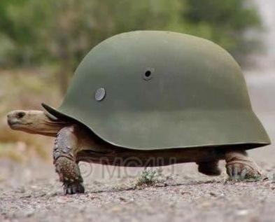 turtle2001.jpg