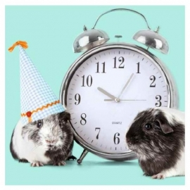 Wenskaart Party Time Cavia