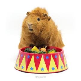 HayPigs!® Craving Tamer™ | Voerbak Groot Circus