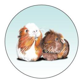 Sticker Cavia's Olivia & Muffin ( 4 stuks)