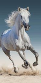 Strandlaken Badlaken Paard wit