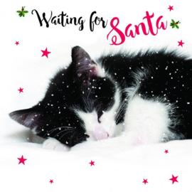 Set van 10 katten kerst kaarten Waiting for Santa