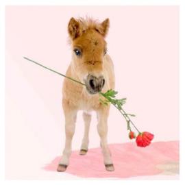 Kaart Roses & Horses