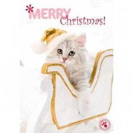 Kerstkaart kitten in arreslee