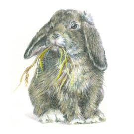 Kaart Hangoor konijntje lekker aan het eten.
