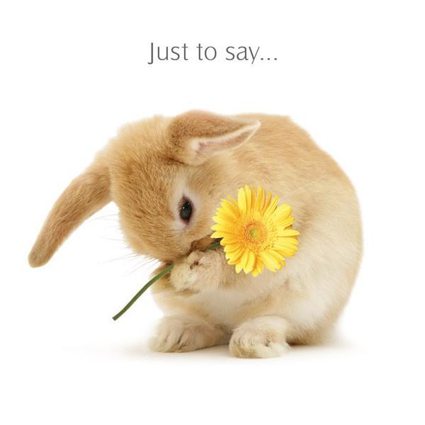 kaart Rabbit A Little