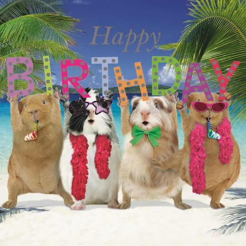 Cavia Kaart Happy Birthday