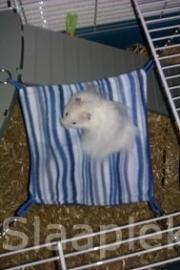 Hamster stripper in de hangmat