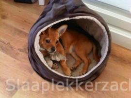 Chihuahua in zijn theemuts