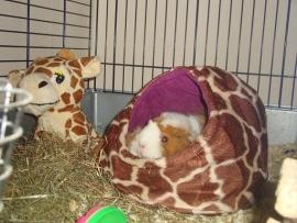 Giraffe vriendjes