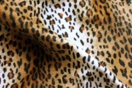 B34 Cheetah