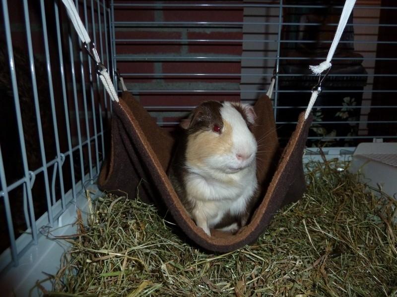 Henry in zijn hangmat