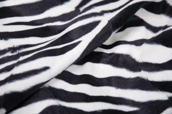 B08 Zebra