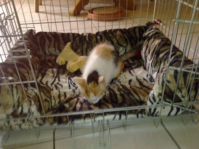 Bench mandje voor katje