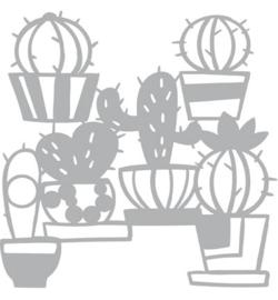 pronty cactus