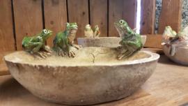 Vogeldrinkbakje met kikkertjes