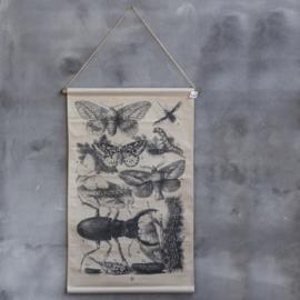 Kaart insecten 64 x 97 cm