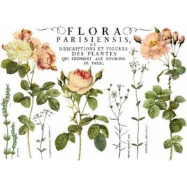 IOD transfer Flora Parisiennes