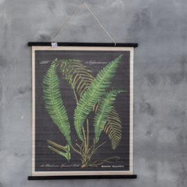Kaart botanisch, met varens 80 x 100 cm
