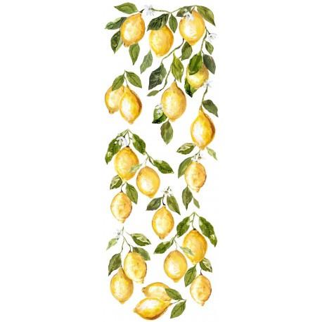 IOD transfer Lemon drops