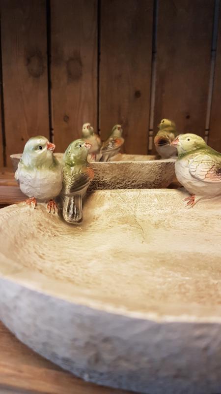 Vogeldrinkbakje met vogeltjes